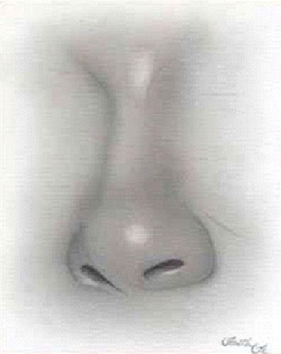 Kreslenie ženského nosu. Kreslenie ženského nosu. Untitled 5 copy
