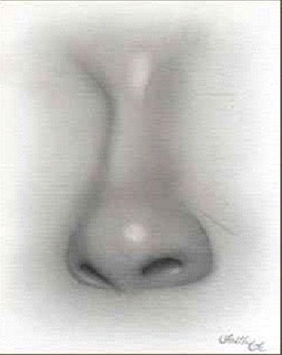 Kreslenie ženského nosu. Kreslenie ženského nosu. Untitled 6 copy