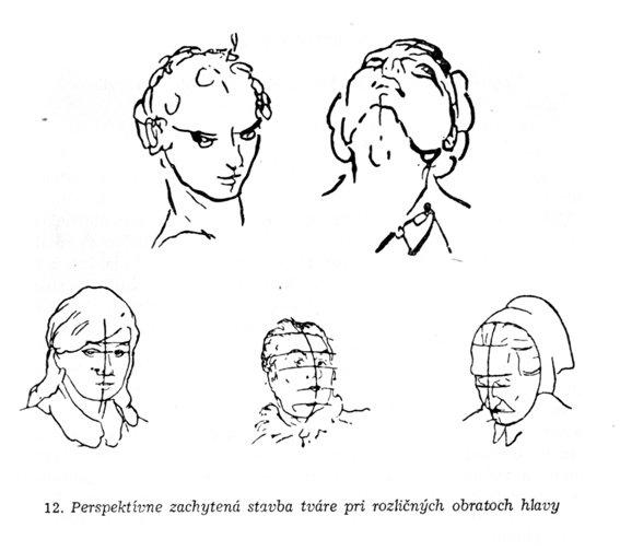 Kreslenie ľudskej hlavy Kreslenie ľudskej hlavy Perspekt  va portr  tov