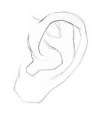 Kreslenie ľudského ucha. ucho 2