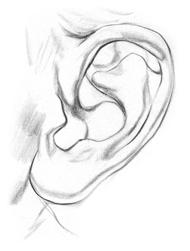Kreslenie ľudského ucha. ucho 3