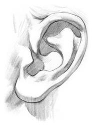 Kreslenie ľudského ucha. ucho 4