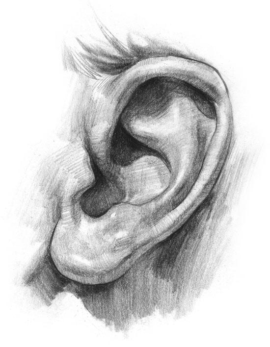Kreslenie ľudského ucha. ucho 5 v  sledok
