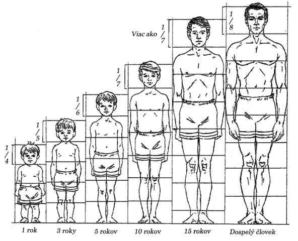 Kreslenie ľudskej postavy. Kreslenie ľudskej postavy. Proporcie tela a z