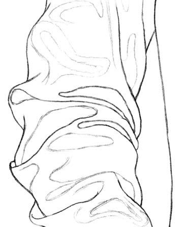 Kreslenie rukávu 6 kreslenie realistickej textílie Kreslenie realistickej textílie. Kreslenie ruk  vu 6